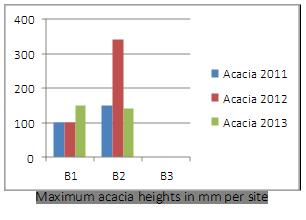 acacia_heights